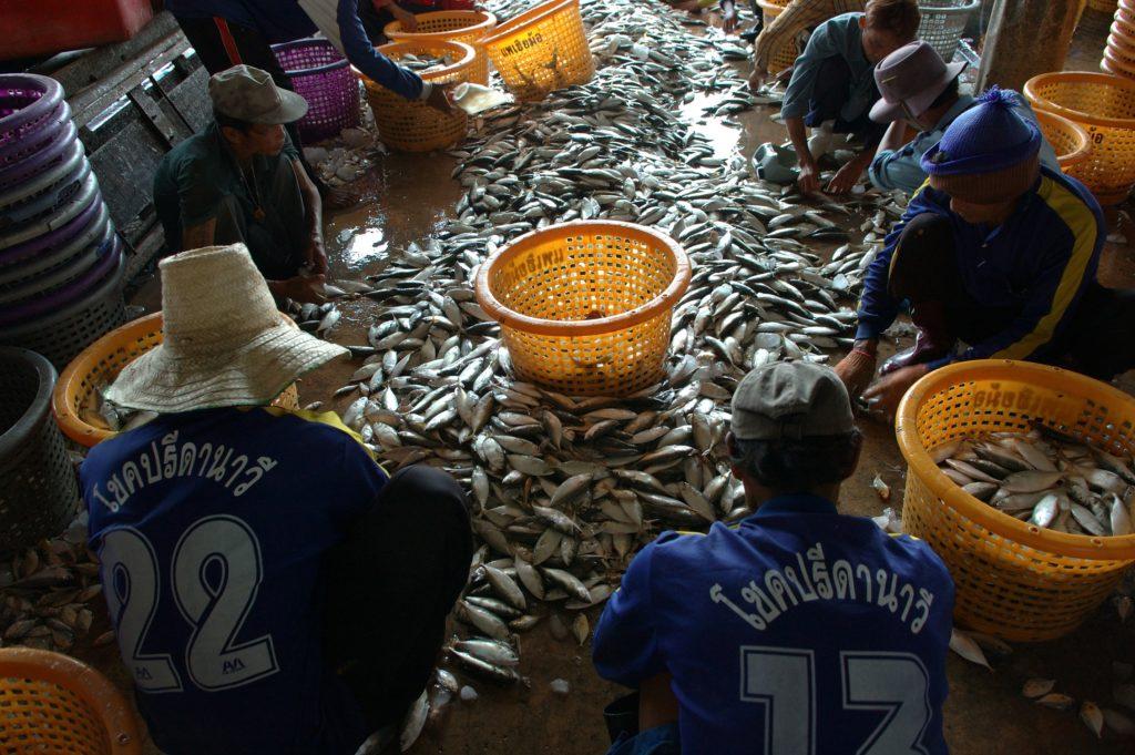 Myanmarilaiset siirtotyöläiset lajittelevat kalaa satamassa. Kuvan henkilöt eivät liity jutussa mainittuun tapaukseen.