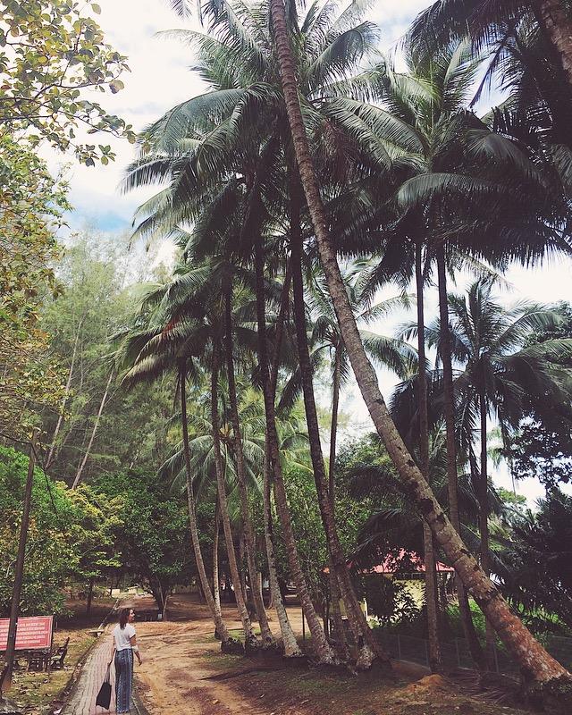 Jos olet onnekas, voit bongata palmupuiden seasta apinoiden kirkkaan oransseja poikasia. Kuva: Meri Hätönen