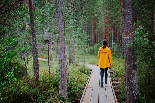 Suomessa metsät ovat tavallisia ja hiljaisia, meidän suomalaisten mielestä hyvä niin. Kuva: Julia Kivelä.