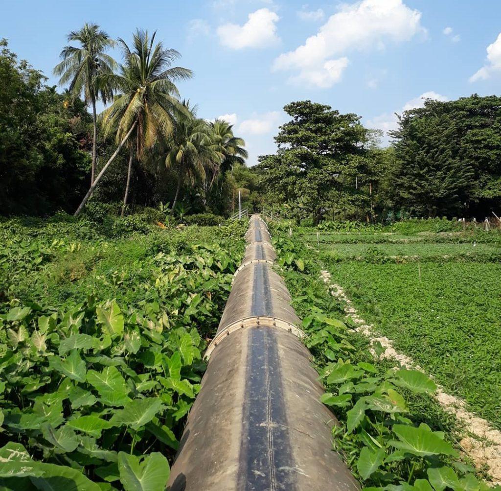 Gyo Phyun vesiputki kulkee Yangonissa Yankinin kaupunginosan viljelypalstojen keskellä. Kuva: Susanna Kujanpää