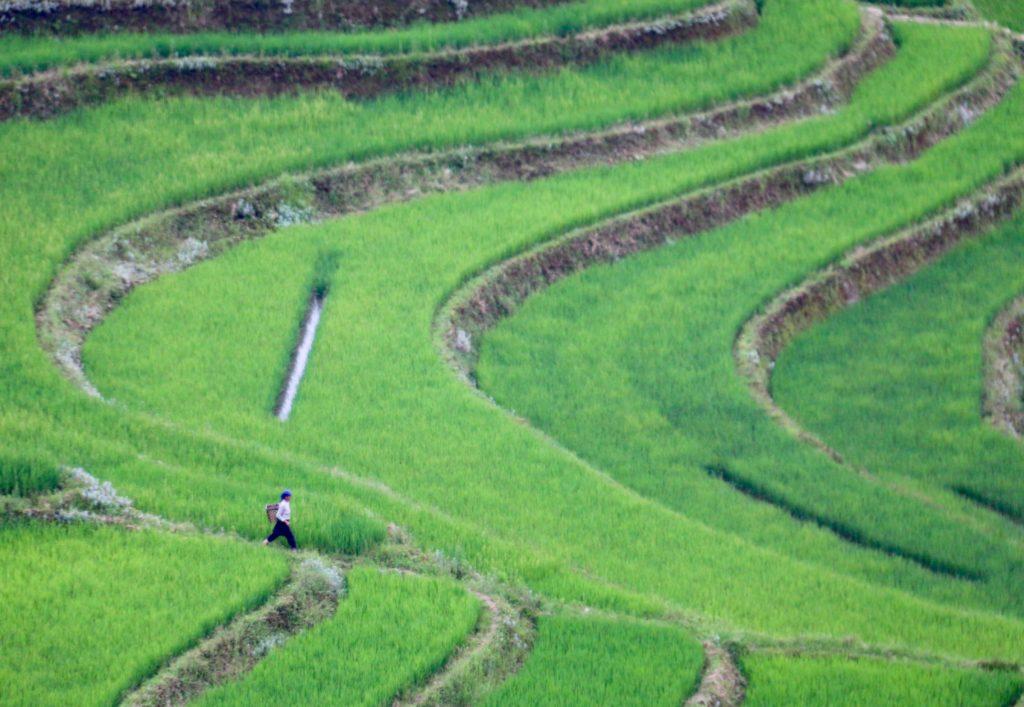 Nainen matkalla kotiin Yuanyangin riisiterasseilla. Kuva: Tarja Kangaskorte.