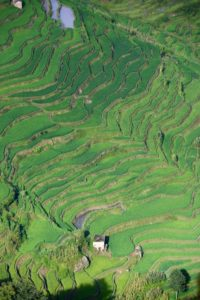 50 shades of green Yuanyangin riisiterrasseilla. Kuva: Tarja Kangaskorte.