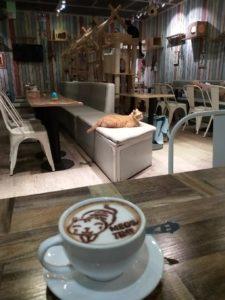 Kissanpäivät kissakahvilassa. Kuva: Hanna Kumpusalo-Tyukalov