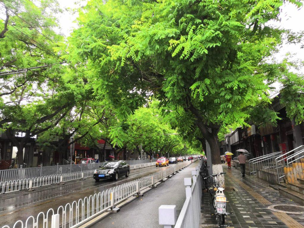 Pekingin jalkakäytävän reunustat on istutettu täyteen puita. Kuva: Vivian Tuominen.