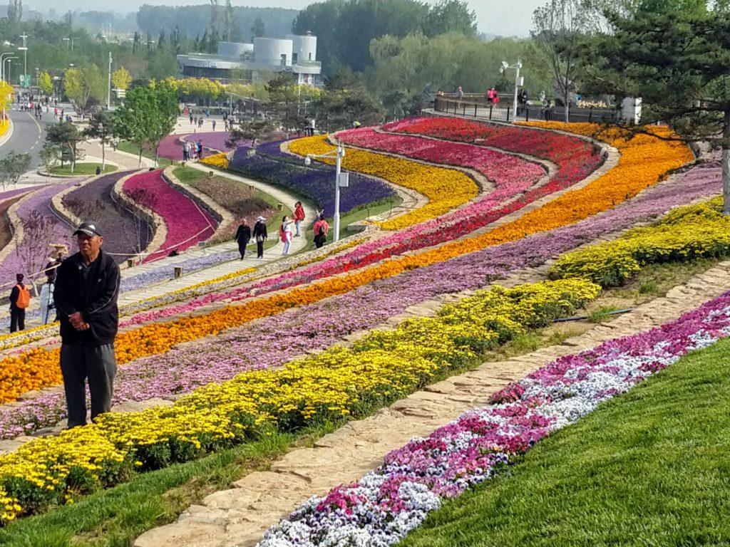 Värien juhlaa Pekingin puutarha-alan expossa.