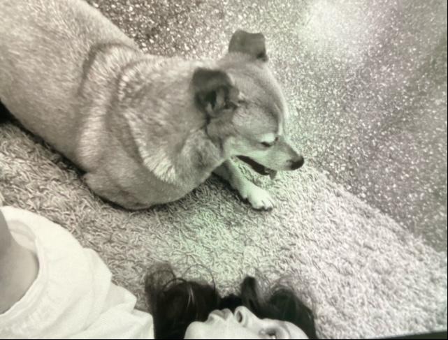 Mustavalkokuva, jossa sekarotuinen koira ja nainen makaavat lattialla. Naisella huulet suukolla koiran suuntaan.