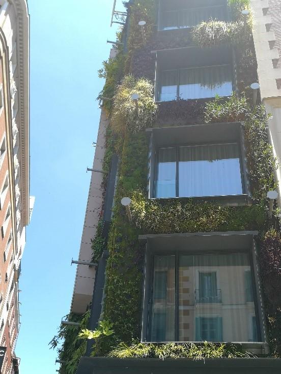 Kasvillisuutta urbaanissa viherseinässä Madridin ydinkeskustassa.