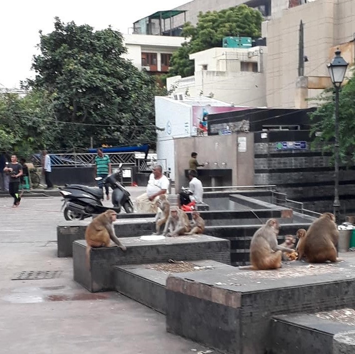 Connaught Placen ympäristössä apinatkin käyvät kauppaa. Kuva: Erik af Hällström