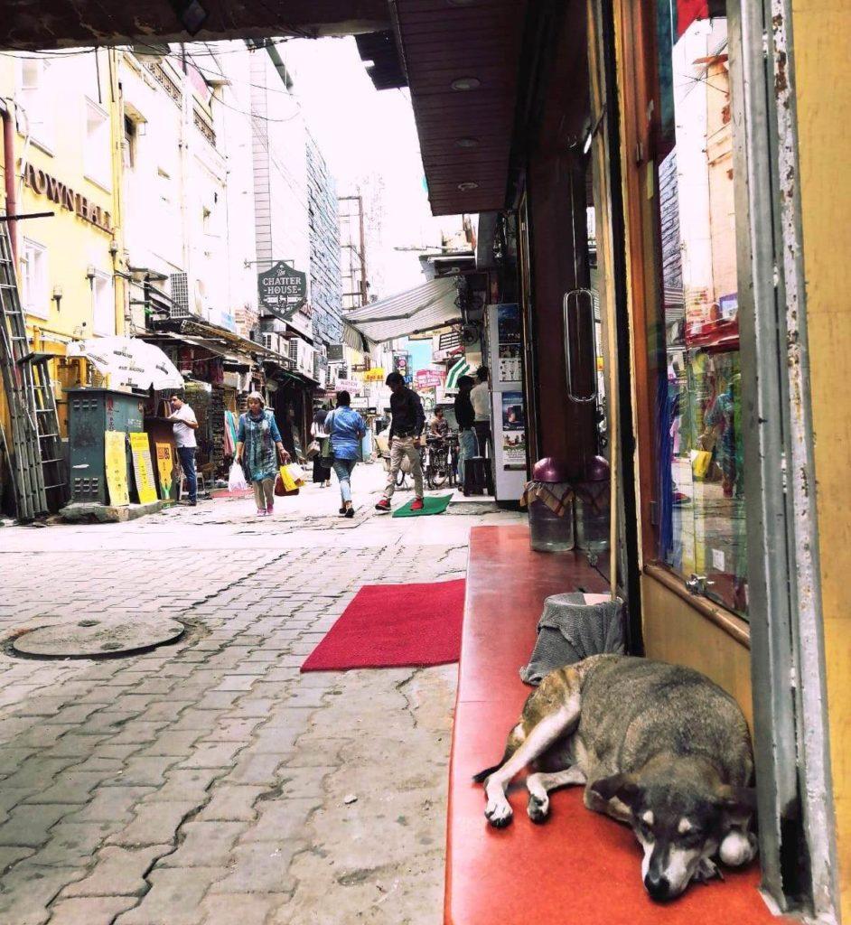 Koira ja katukuvaa Khan Marketilta. Kuva: Nelli Mikkola