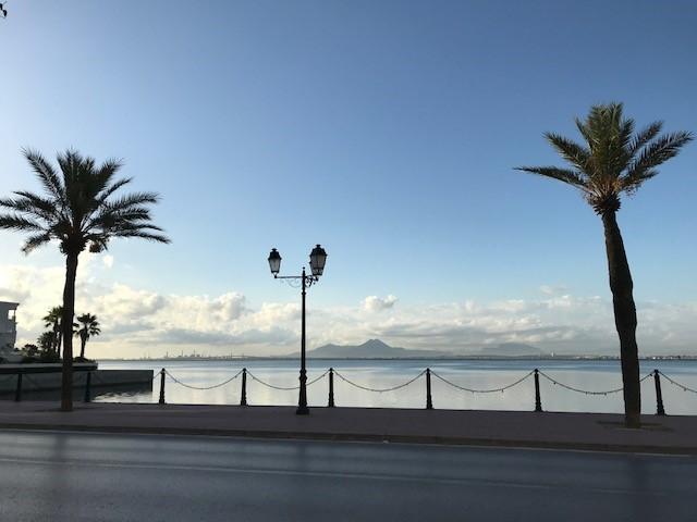 Tunisian palmut huojuvat omassa vapaudessaan kaikki tyynni. Freedom Online Coalition-puheenjohtajuuden yksi teema on edistää ilmaisunvapautta internetissä. Kuva: Laura Saarinen