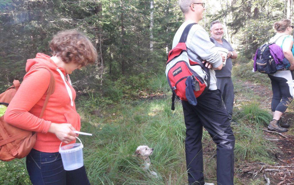 Sieniä etsimässä Oslon metsissä.