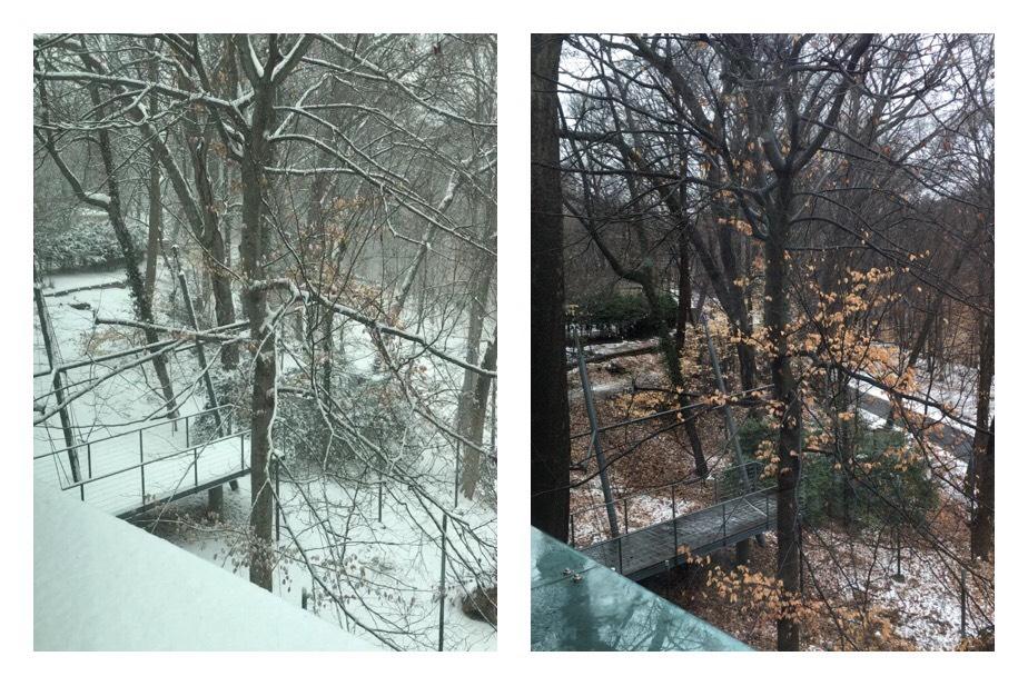 Kaksi kuvaa suurlähetystön takapihalta. Kuvat otettu samasta paikasta ja kuvien välillä ainoastaan 24h eroa.