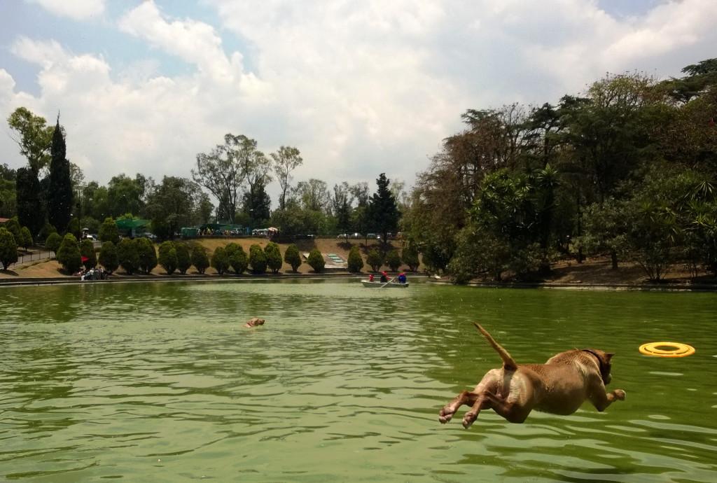 Myös citykoirat viihtyvät Chapultepecin puistossa.