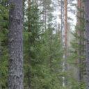Sebastian Nuottimäki